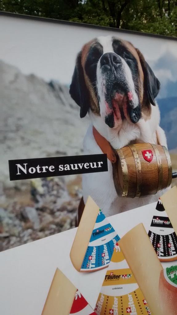 """Publicité pour le fromage Tilsit: un chien saint-bernard portant un tonneau avec un drapeau suisse avec cette légende: """"Notre sauveur""""."""